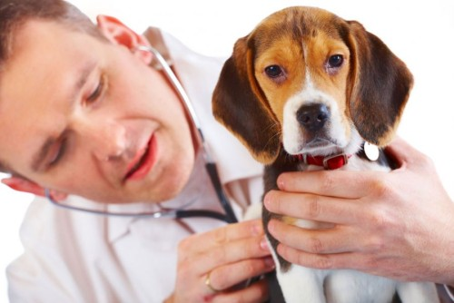 Лечение щенков