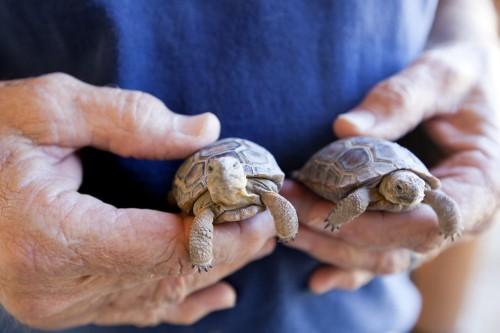 Ветеринарный врач для рептилий