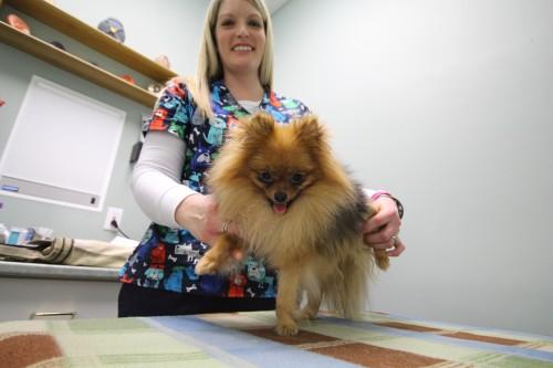 Ветеринарный врач физиотерапевт