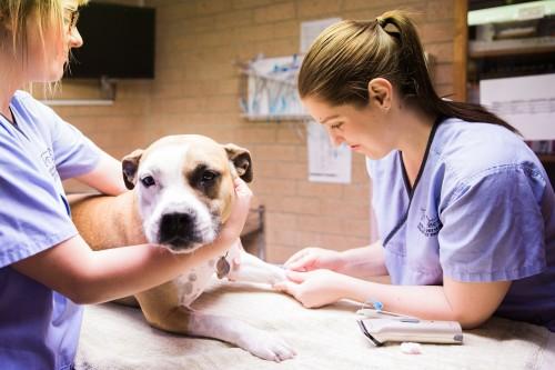 Ветеринарный врач травматолог