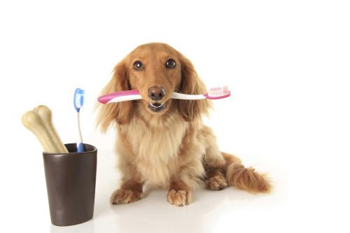 Ветеринарный врач стоматолог