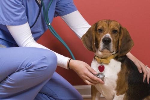 Ветеринарный врач кардиолог