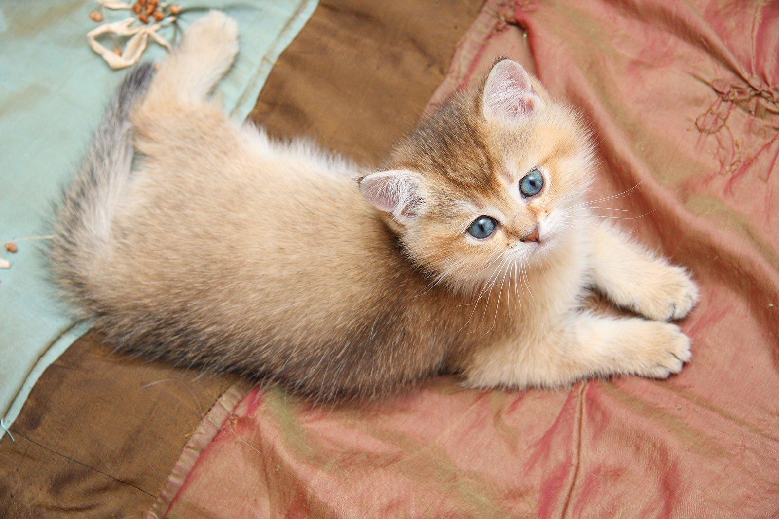 Цистит у котов симптомы и