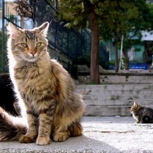 Цистит у кота лечение антибиотиками