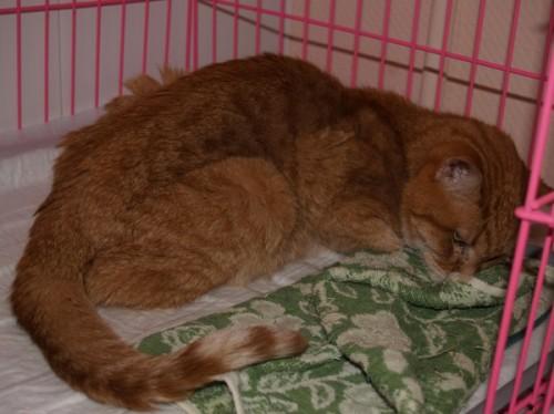 Royal Canin Neutered Cat Food   Free PP 35+