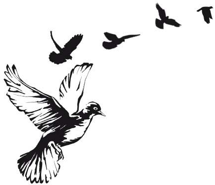 Особенности анатомии домашних птиц. Лечение птиц в ветклинике