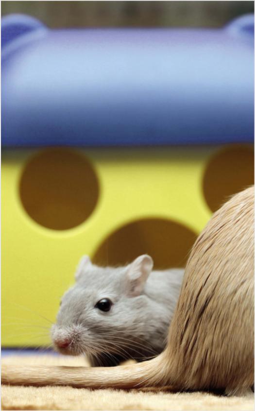 Лечение грызунов в ветеринарном центре