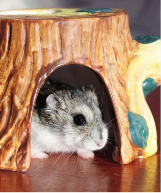 Лечение грызунов в ветцентре и на дому
