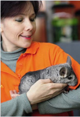 Лечение крыс в ветеринарной клинике и на дому