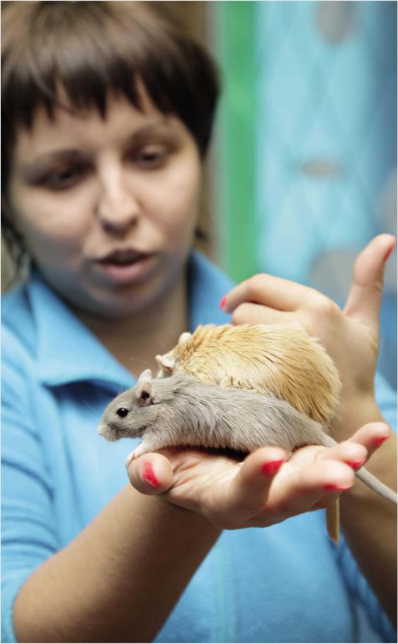 Крысы, хомяки, шиншиллы. Лечение в ветлечебнице и на дому