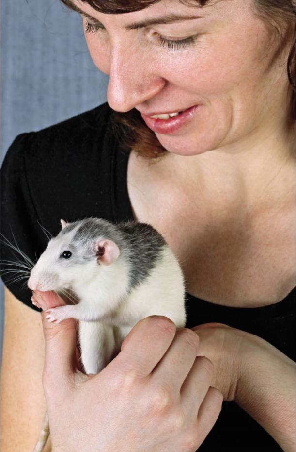 Крысы, хомяки, шиншиллы