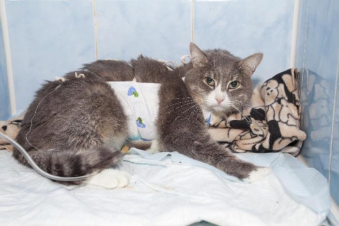 хроническая почечная недостаточность у кошек симптомы лечение